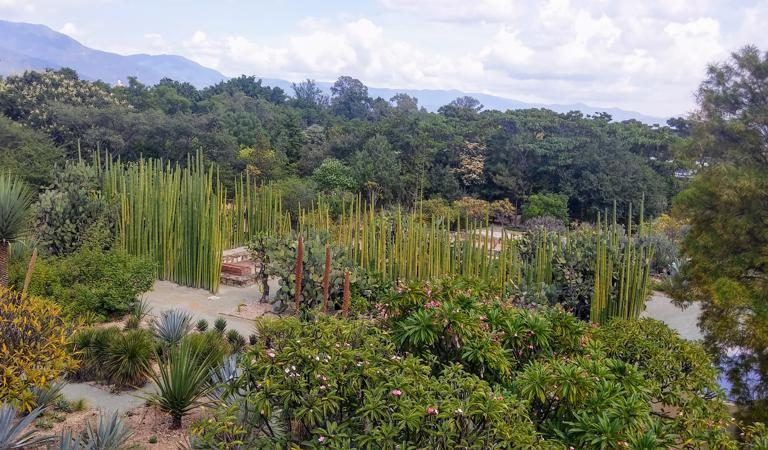 Oaxaca's Ethnobotanical Garden: A Showcase for Diversity