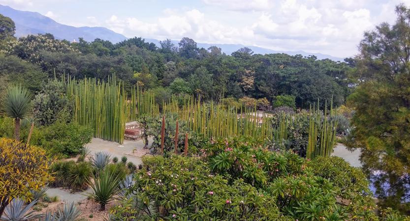 Oaxaca's Ethnobotanical Garden: A Showcase for Diversity