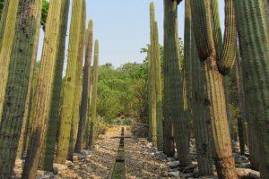 Oaxaca Ethnobotanical Garden